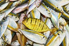 Small mackerel fish at the Central Market in Puerto Princesa, Philippines royalty free stock image