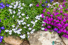 Small magenta and white flower decorate on stone Royalty Free Stock Images