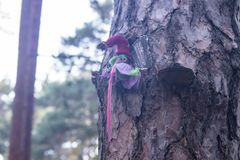 Small magical garden of the gnomes in the forest. Small magical garden of the gnomes in the trees stock photography