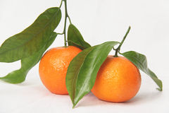 Small mandarin clementines stock image