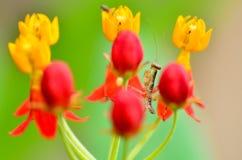 Small mantis between flower Stock Photos