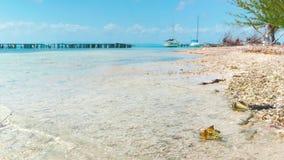 Small marina at coral island stock footage