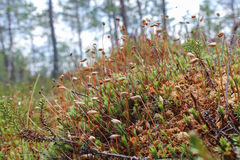 Small marsh plants Stock Images