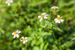 Small meadow in field Royalty Free Stock Images