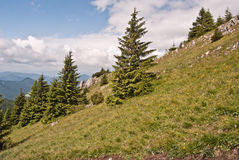 Small meadow with isolated trees and limestone rocks near Velky Choc hill Royalty Free Stock Image