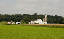 Small midwest dairy farm Stock Images