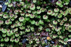 Small mini plants in the Southern of Newzealand in Springtime Royalty Free Stock Images