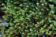 Small mini plants in the Southern of Newzealand in Springtime Royalty Free Stock Photography