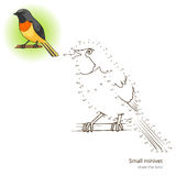 Small minivet bird learn to draw vector Stock Illustration