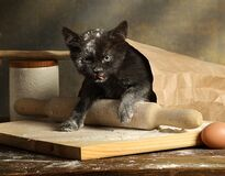 Small mischievous black kitten got into a bag of flour. On the kitchen table