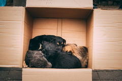 Small Mixed Breed Puppies Sitting In Cardboard Box. Dogs Huddle Stock Photography