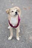 Adorable mixed breed puppy posing outdoors Stock Photos