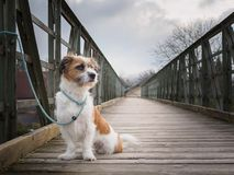 Small mongrel dog tied to an iron bridge royalty free stock image
