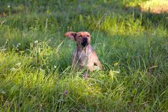 Small mongrel dog on walk in meadow. Varied behavior of domestic animals (dogs stock image