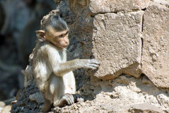 Small monkey Stock Images
