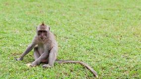 Small monkey Royalty Free Stock Photography