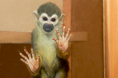 The small monkey. The small monkey in a cage behind the glass in the zoo royalty free stock photography