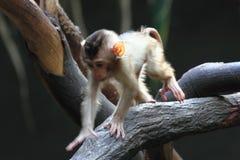 Small monkey child Stock Photo