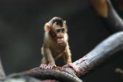Small monkey child Royalty Free Stock Photography
