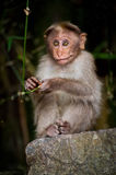 Small monkey looking around in bamboo forest Stock Photos