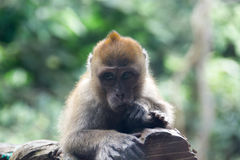 Small monkey resting on a tree branch stock photos