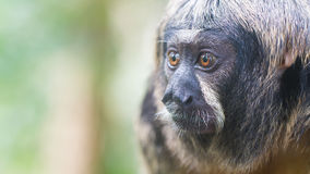 Small monkey, selective focus Royalty Free Stock Photos