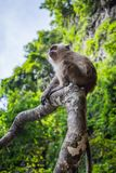 Small monkey sitting on a tree branch on a Monkey Beach in Thailand, green trees and blue sky in the background royalty free stock photo