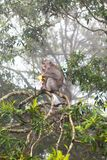 Small monkey sitting on a tree Royalty Free Stock Photo