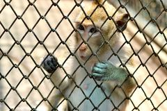 Small monkey in the zoo. Thailand Stock Images