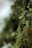 Small moss green beanie with autumn tree macro blur parasite stock photography