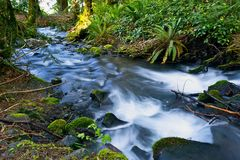 Small Mossy Creek Stock Images