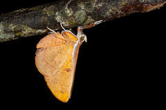 Small moth Royalty Free Stock Photography