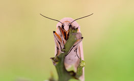 A small moth Royalty Free Stock Photos