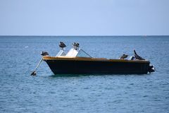 Small motorboat with dropped anchor on the sea, occupied by birds. And ducks royalty free stock photos