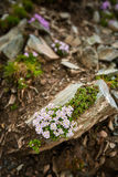 Small mountain flowers closeup Royalty Free Stock Photos