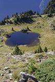Small mountain lake in Chamrousse range. Cattle drive around a small mountain lake in Chamrousse range Royalty Free Stock Photos