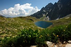 Small mountain lake with flowers in foreground Royalty Free Stock Photo