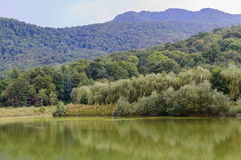 Small mountain lake with green water in Russia Stock Images