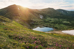 Small mountain lake on sunset with rhododendrons Stock Photography