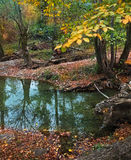 Small mountain river. Autumn landscape Stock Photos