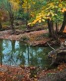 Small mountain river. Autumn landscape Stock Photos