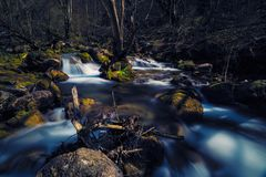 Small mountain river flowing through rocks in a forest in the early days of spring.  stock photos