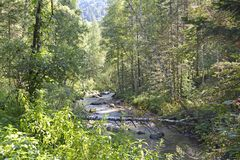 A small mountain river flowing through a thick forest in the mountains stock photo