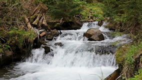Small mountain river running over rocks. Small forest river running over rocks in the fairy forest of the Carpathians stock video