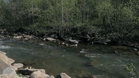 The small mountain river stock footage
