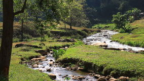 Small mountain river in Thailand stock video footage
