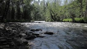 Small mountain river and trees on a shore stock footage