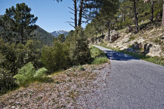 Small mountain Road to immersed in nature in central Corsica Stock Photo