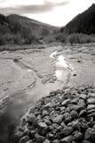 Small mountain stream. Stock Image