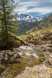 Small mountain stream in Corsica and Asco mountains Stock Photos